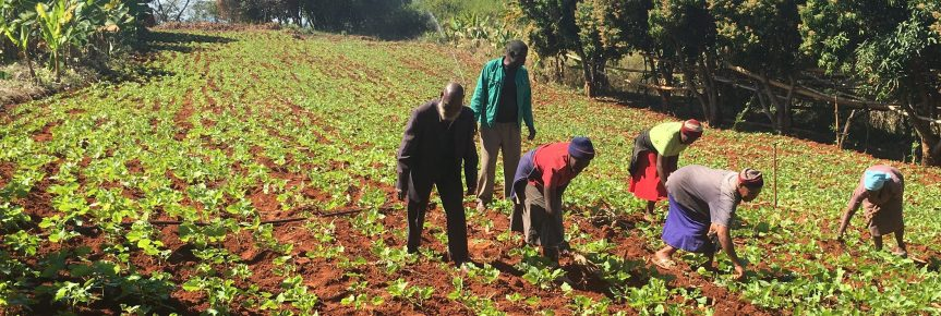 Adaptive agriculture makes a difference in Manicaland