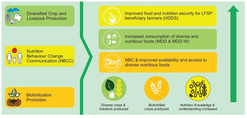 Rapid Nutrition and Biofortification Study at a Glance